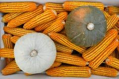 wysuszona kukurudzy bania Zdjęcie Stock