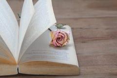 Wysuszona menchii róża na starych książkach otwiera Rocznika brzmienie obraz royalty free