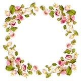 Wysuszona menchii róży kwiatów rama Obrazy Stock