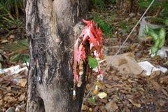 Wysuszona nagietka kwiatu girlanda w tajlandzkim stylowym obwieszeniu na drzewie zdjęcia royalty free
