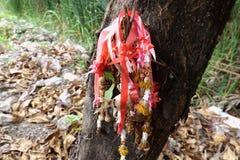 Wysuszona nagietka kwiatu girlanda w tajlandzkim stylowym obwieszeniu na drzewie zdjęcia stock