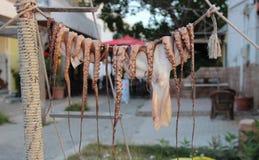 Wysuszona ośmiornica w Greckiej restauraci Obraz Stock