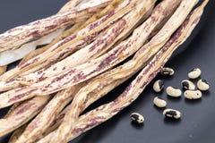 Wysuszona purpur lub tygrysa deseniowego jarda Długa fasola z nasieniodajnym rea Fotografia Royalty Free