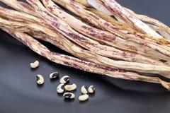 Wysuszona purpur lub tygrysa deseniowego jarda Długa fasola z nasieniodajnym rea Zdjęcia Royalty Free