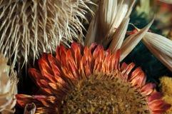 Wysuszona roślina czerwony kolor w dekoracyjnym bukiecie fotografia royalty free