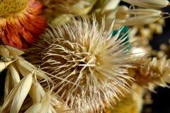 Wysuszona roślina w dekoracyjnym bukiecie zdjęcie stock