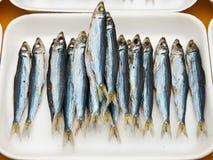 wysuszona ryba Obraz Royalty Free