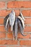 wysuszona ryba Fotografia Stock