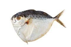 wysuszona ryba Fotografia Royalty Free