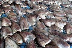wysuszona ryba Obrazy Stock