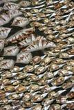 wysuszona ryba Obraz Stock