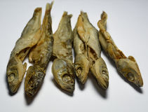 Wysuszona ryba - Cironi Obrazy Royalty Free