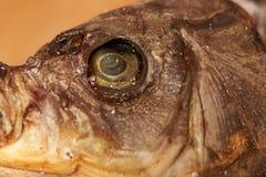 Wysuszona ryba na stole piwna przekąska Zdjęcia Stock