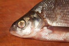 Wysuszona ryba na stole piwna przekąska Zdjęcie Stock