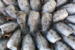 Wysuszona ryba w koszu Obraz Royalty Free
