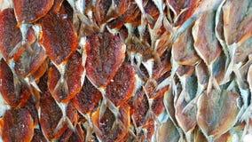 Wysuszona ryba w Tajlandia obraz royalty free