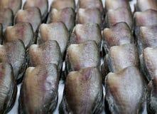 Wysuszona Snakeskin gourami ryba Obraz Royalty Free