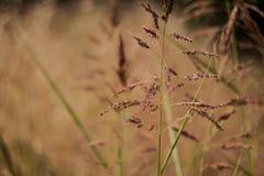 Wysuszona trawa w gorącym letnim dniu zdjęcie royalty free