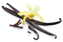 Wysuszona wanilia połuszczy i storczykowy waniliowy kwiat na białym tle fotografia stock