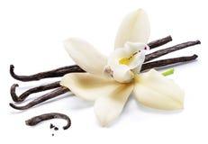 Wysuszona wanilia wtyka i storczykowy waniliowy kwiat odizolowywający na białym tle obrazy stock