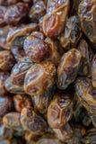 Wysuszone daty owocowe Fotografia Stock