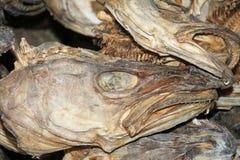 Wysuszone dorsz akcyjnej ryba głowy zamykają up, Lofoten, Norwegia, Europa Obraz Stock