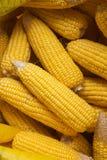 Wysuszone kukurudze w worku Obraz Stock