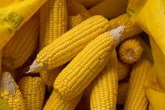 Wysuszone kukurudze w worku Obrazy Stock