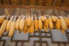 Wysuszone kukurudze wieszają na dachu dom Fotografia Royalty Free