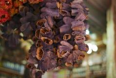 Wysuszone oberżyny na sznurku w bazarze zdjęcie royalty free