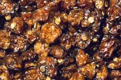Wysuszone pęcherzyc owoc Fotografia Stock