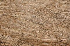 Wysuszone palmowe gałąź są popielate Tekstura lub t?o fotografia stock