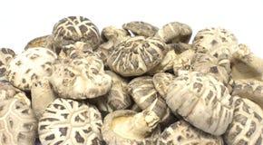 Wysuszone premii Shiitake pieczarki - karmowy składnik zdjęcie royalty free