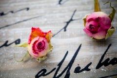 Wysuszone róże Obraz Royalty Free