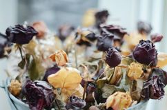 Wysuszone róże Zdjęcie Royalty Free