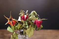 Wysuszone róże w wazie na drewnianym stole na czarnym tle Zdjęcie Stock