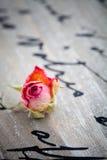 Wysuszone róże Zdjęcia Stock