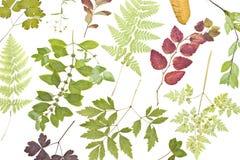 wysuszone rośliny Zdjęcia Stock