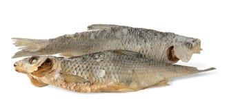 wysuszone ryba Obrazy Stock