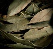 Wysuszonego laurowego liścia horyzontalny tło Zdjęcia Stock