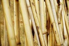 Wysuszony bambusa ogrodzenia tło Obraz Stock