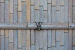 Wysuszony bambusa ogrodzenia tło Zdjęcie Royalty Free