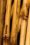 Wysuszony Bambusowy tło zdjęcia royalty free