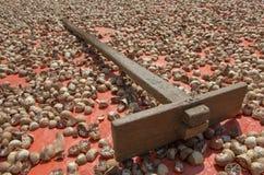 Wysuszony betel - dokrętki ans drewniana brona. Obraz Royalty Free