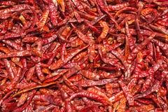Wysuszony czerwony chili, karmowi składniki Obraz Stock
