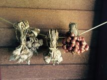 Wysuszony czosnek i cebule Fotografia Stock