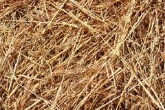 Wysuszony długi trawy tło obrazy royalty free