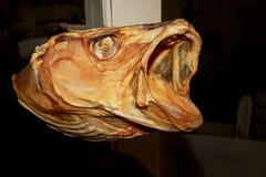 Wysuszony dorsz akcyjnej ryba głowy zakończenie up, Lofoten, Norwegia, Europa Obraz Stock