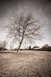 wysuszony drzewo Fotografia Royalty Free