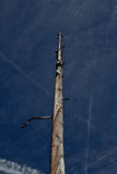 Wysuszony drzewo II Zdjęcia Stock